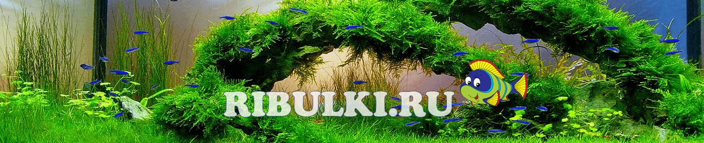 Ribulki.ru